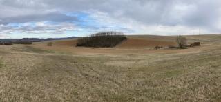 Tizenhat-ezer őshonos fát ültetett Csesztve és Szügy határába a napelempark beruházója