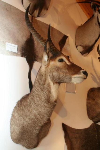 Afrikai-Magyar Vadászati Magánmúzeum
